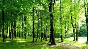RURALNI RAZVOJ – Najava poziva za tip operacije 8.6.1. Modernizacija tehnologija, strojeva, alata i opreme u pridobivanju drva šumsko-uzgojnim radovima